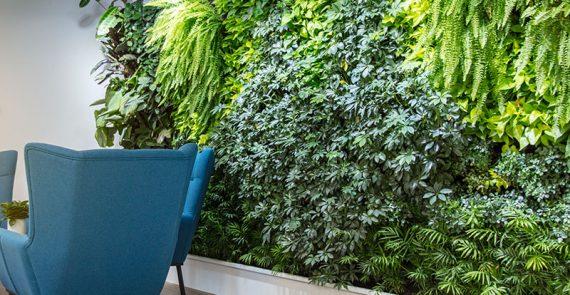 Innenraumbegrünung und Büropflanzen vom Gartenbauer für Mönchengladbach und Düsseldorf